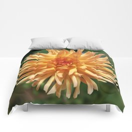 Stunning Apricot Dahlia Comforters