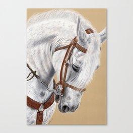 Horse Portrait 01 Canvas Print