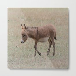 Miniature Donkey Foal Metal Print