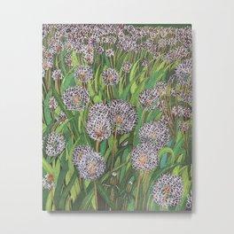 Dandelions field Metal Print