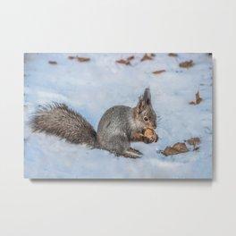 Hard nut to crack Metal Print