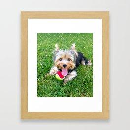 Happy Yorkie Framed Art Print