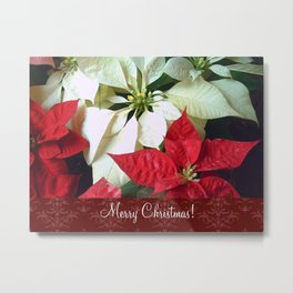 Mixed Color Poinsettias 2 Merry Christmas S5F1 Metal Print
