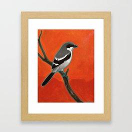Loggerhead Shrike Framed Art Print