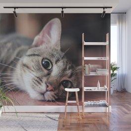 Playful Kitty Wall Mural