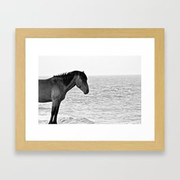 Assateague Pony Framed Art Print