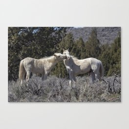 Wild Horses with Playful Spirits No 2 Canvas Print