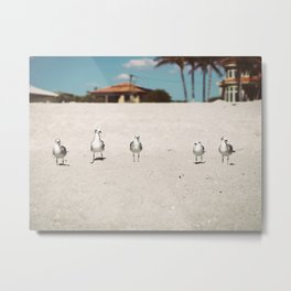 Seagulls in a Row Metal Print