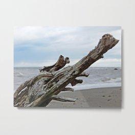 Natural Driftwood Metal Print