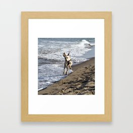 Flying Dog - Catania Beach - Sicily Framed Art Print
