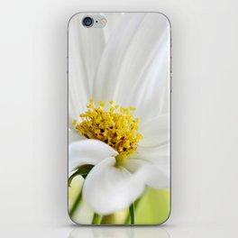 Cosmea white macro 037 iPhone Skin