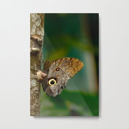 Butterfly eye of owl (Caligo eurilochus) Metal Print