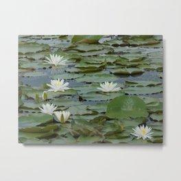 Field of Water Lillies Metal Print