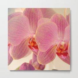Triplet pink orchids  Metal Print