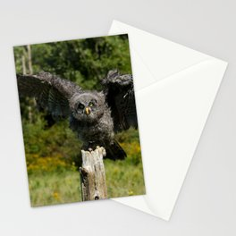 Baby Great Gray Owl Stationery Cards