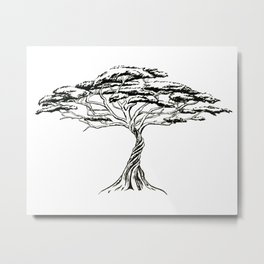 Whistling Thorn , Zen Bonsai African Tree Metal Print