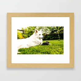 My little Boy Framed Art Print