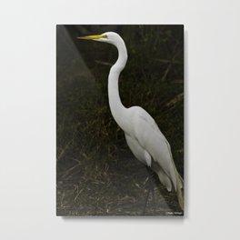 Great Egret Metal Print