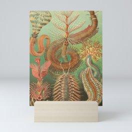 Ernst Haeckel Spined Marine Worms Illustration, 1904 Mini Art Print