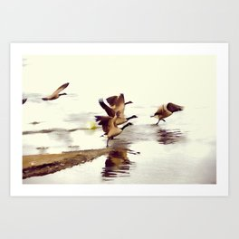 The Take Off - Wild Geese Art Print