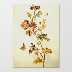Chrysantheme Canvas Print