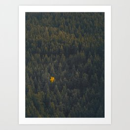 Modern Landscape Photography Single Autumn Tree Pine tree Forest Green Trees Yellow Focal Point Art Print