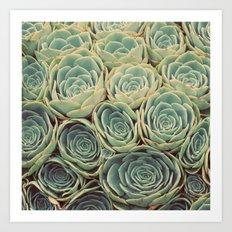 Sea of Succulents Art Print