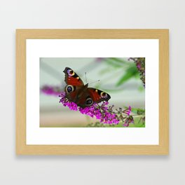 Butterfly Impression  Framed Art Print