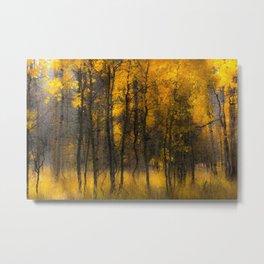 Golden Aspens, Colorado Metal Print