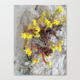 HAIRY COLLECTION (24) Canvas Print