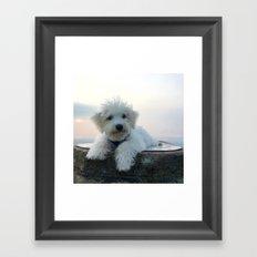 Teddy At Sunset Framed Art Print