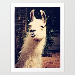 What The Llama Art Print