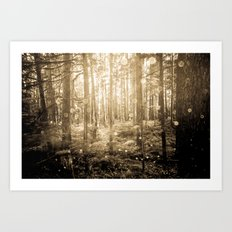 Forest Trees - Vintage Sepia Magical Lights Woods Art Print