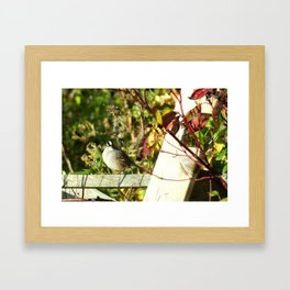 Fence Sitter Framed Art Print