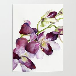 Radiant Orchids: Magenta Dendrobiums Poster