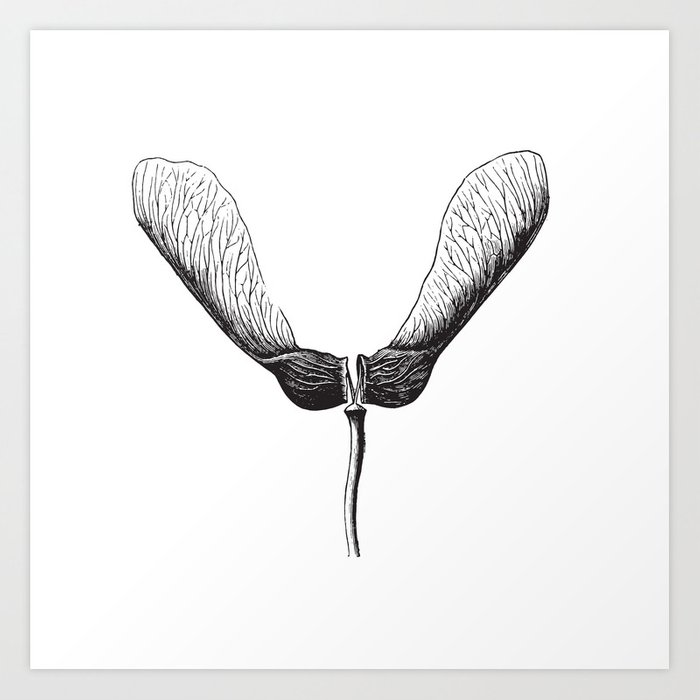 Maple Seed Helicopter Art Print by elle_be