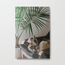 Dog by Jake Noren Metal Print