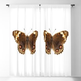"""Butterfly species Junonia orithya """"Eyed Pansy"""" Blackout Curtain"""