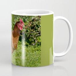 One young brown Rhode Island Red hen Coffee Mug