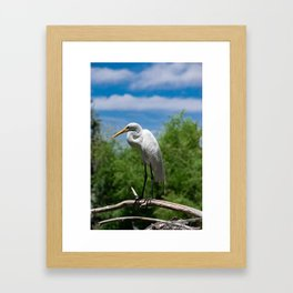 Great Egret Two - Utah Framed Art Print