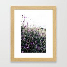 ...wallflowers... Framed Art Print