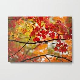 Autumn Bliss Metal Print