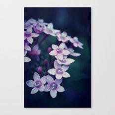 Spring Flower 11 Canvas Print