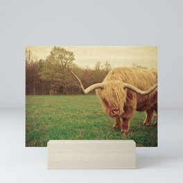 Scottish Highland Steer - regular version Mini Art Print
