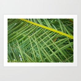 Crossed Palms Art Print