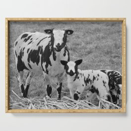 Speckled Sheep with lambs | Dutch landscape | Fine art nature photography Serving Tray