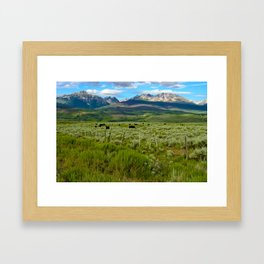 Colorado cattle ranch Framed Art Print