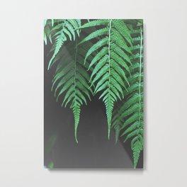 Dangling Ferns Metal Print