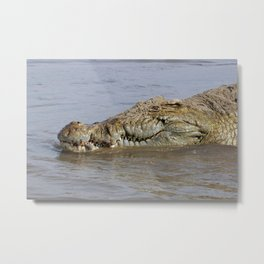 African Nile Crocodile Face Closeup Wildlife, Omo River, Africa Metal Print