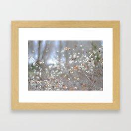 White berries in the winter Framed Art Print